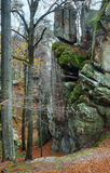 Lofty stones in autumn forest Stock Image