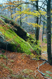 Lofty stones in autumn forest Stock Photos