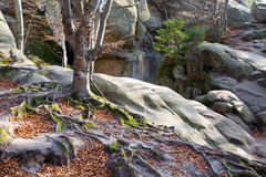 Lofty stones in forest Stock Image
