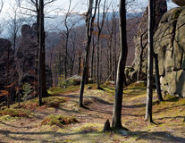 Lofty stones in forest Stock Photo