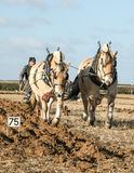Lofty and Thor Norwegian Fjords horses ploughing Royalty Free Stock Images