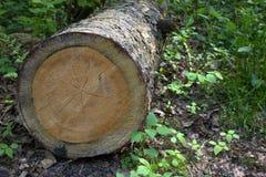 Log Stock Photography
