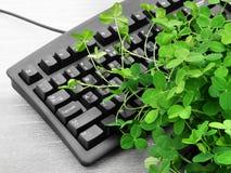 log 3 roślin Zdjęcia Stock