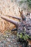 Log alagado Fotografia de Stock