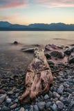 Log Along Lake Shore with Rocks Stock Images