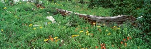 Log Amid Alpine Flowers, Stock Image