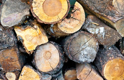 Log Background Royalty Free Stock Photography