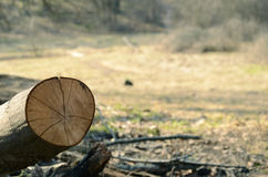 Log on the background of meadows. Picnic, camping. Summer, clean. Rest relax Royalty Free Stock Images