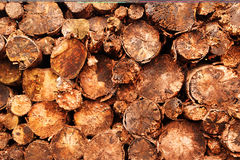 Log background texture Royalty Free Stock Photos