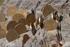 Log bank Stock Photography