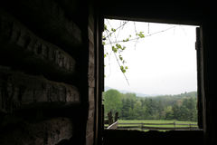 Log barn view. View from inside an old log barn, onto a green field and forest, with grape vines silhouetted in the sky royalty free stock photo