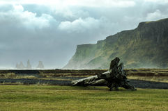 Log by the beach. A beautiful scene in Vik, iceland Stock Image