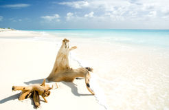 Log on a beach Royalty Free Stock Image