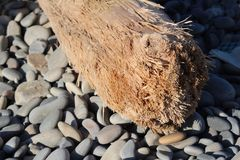 Log on the beach. Close-up on an old log, light stones, sharp sharpness Stock Images