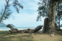 Log on The Beach Stock Image