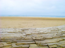 Log on Beach Freshwater West Pembrokeshire Stock Images