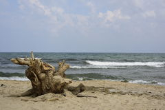 Log on the beach Royalty Free Stock Images