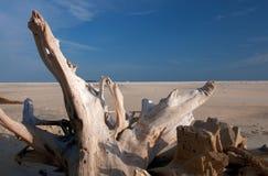 Log on the beach. The old log on the beach Royalty Free Stock Photos