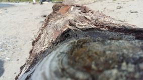 Log Beachy Foto de Stock Royalty Free