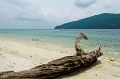 Log on a beautiful tropical beach Royalty Free Stock Image