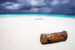 Log. Big old log lying in the water at the beach with white sand Stock Photo