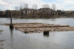 A log boom tied up to a piling in a river stock images