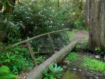 Log Bridge. Along a woodlands trail Stock Image
