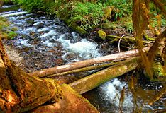 Log Bridge. Logs over Camp Creek at Camp Creek Campground - near Rhododendron, OR Royalty Free Stock Photography