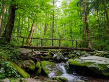 Log Bridge over Forest Creek, Lush Woods Royalty Free Stock Photo