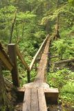 Log bridge and trail Royalty Free Stock Photos