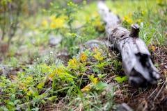 Log caído cercado pelas folhas coloridas em Rocky Mountain National Park imagens de stock royalty free