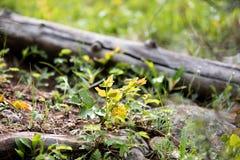 Log caído cercado pelas folhas coloridas em Rocky Mountain National Park foto de stock