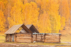 A log cabin Royalty Free Stock Photo