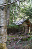 Log cabin in conifer forest Royalty Free Stock Image