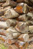 Log cabin craftmanship. A closeup of logs joined at the corners in the construction of rustic wood buldings stock photography