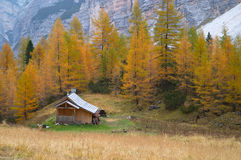 Log cabin in forest Stock Image