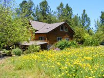 LOG CABIN HOME IN A COUNTRY MEADOW OF YELLOW POPPIES Royalty Free Stock Images