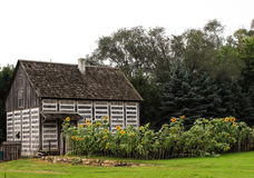 Log Cabin and Sunflowers. An old log cabin with a sunflower garden royalty free stock photos