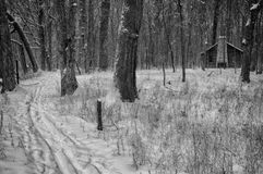 Log Cabin in Wintery Woods. Rustic log cabin nestled among bare trees in snow laden Ryerson Woods. Black and white image stock images