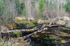 Log causeway across a forest creek Stock Images