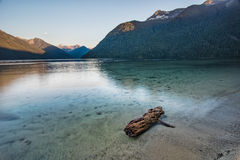 Log in a clear turquoise lake Royalty Free Stock Image