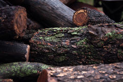 Log close up. Wood trunk pile in color Royalty Free Stock Image