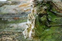 Log. Closeup on a moss-covered log, similan, phang-nga, thailand Stock Photos