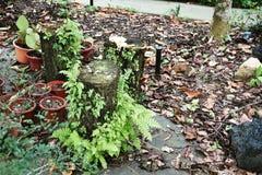 Log com cogumelos imagens de stock royalty free