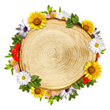 Log cross section with flowers Stock Photos