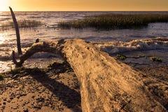 Log curvado Foto de Stock Royalty Free
