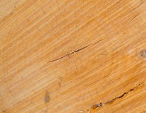 Log Stock Photos