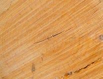 Log. Cuted surface of a pine log Stock Photos