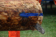 Log cutting. A sharp blade will slice through a log with little effort Stock Image