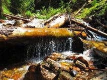 Log da água Fotos de Stock Royalty Free